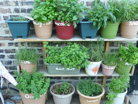 herb garden ashwiniahujaonline s weblog herb garden thora s blog