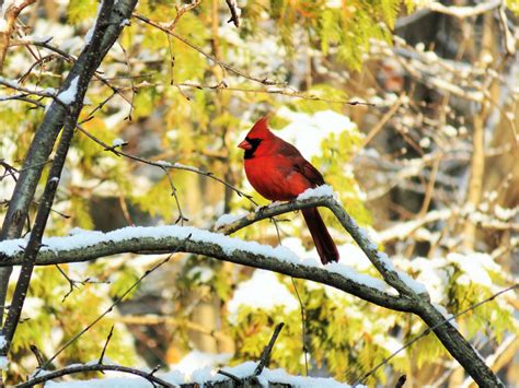 winter bird food recipes suet the old farmer s almanac