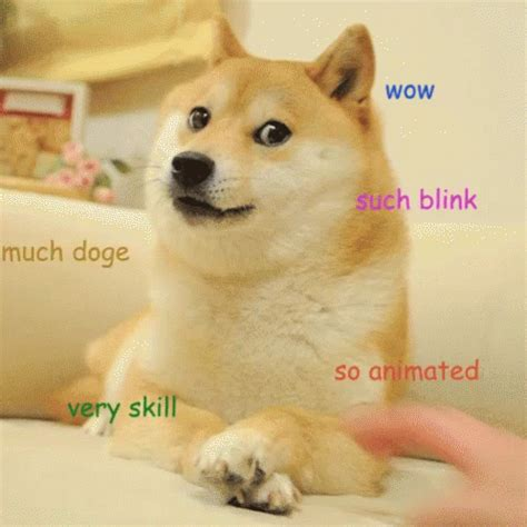 Much Doge Meme - much doge gif meme doge muchdoge discover share gifs