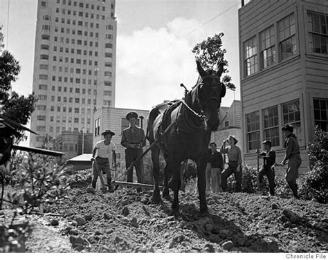 Victory Garden Ww2 by Bring Back The Wwii Era Victory Garden Sfgate