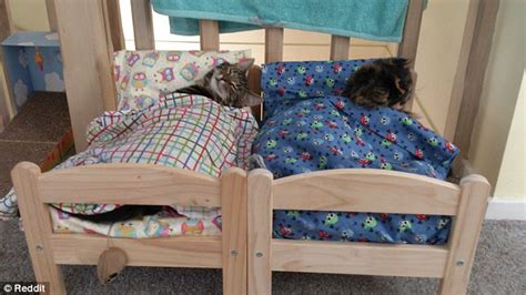 Bunk Beds For Cats Cats Sleep In Ikea Miniature Beds Made For Dolls Daily Mail