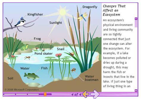 ecosystem diagram michael friel ecosystem