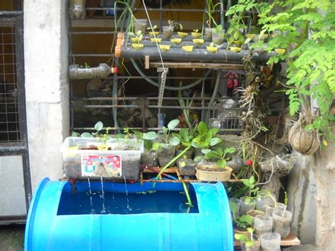 Small Home Tilapia Farm 1000 Images About Aquaponics On