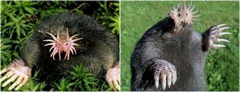 imagenes de animales raros en el mundo top10 161 los animales m 225 s raros del mundo cabroworld