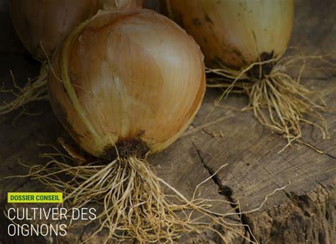 Comment Cultiver Les Oignons by Comment Cultiver Des Oignons Nortene