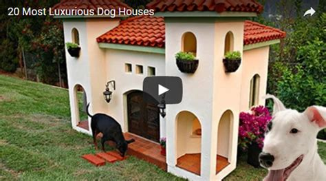 20 Most Luxurious Dog Houses | 20 most luxurious dog houses shih tzu lovers