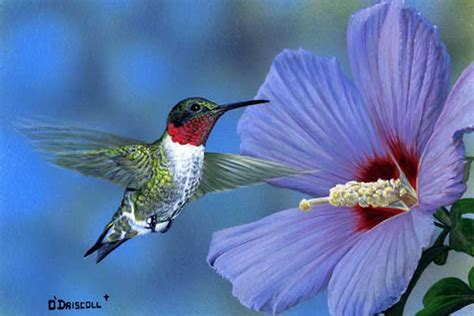 rose of sharon and hummer order page