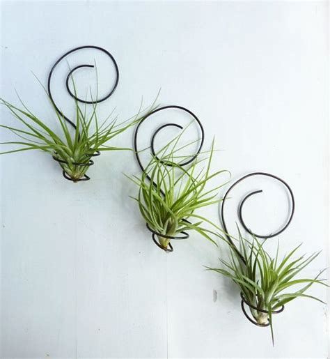 appealing air plant display photos best inspiration home design eumolp us
