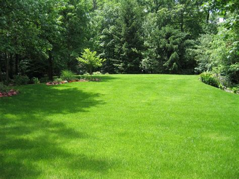 Trees For Backyard Landscaping by Awesome Japanses Style Lawn Grass In Backyard Putting
