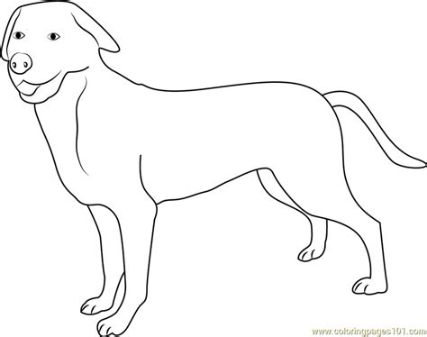 mountain dog coloring page greater swiss mountain dog coloring page free dog