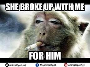 Funny Monkey Memes - monkey meme pictures to pin on pinterest thepinsta