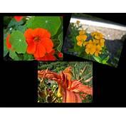 Les Fleurs Comestibles  Le Jardin Des Cinq Sens Yvoire