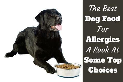 food for dogs with allergies best food for allergies treatment starts from the inside