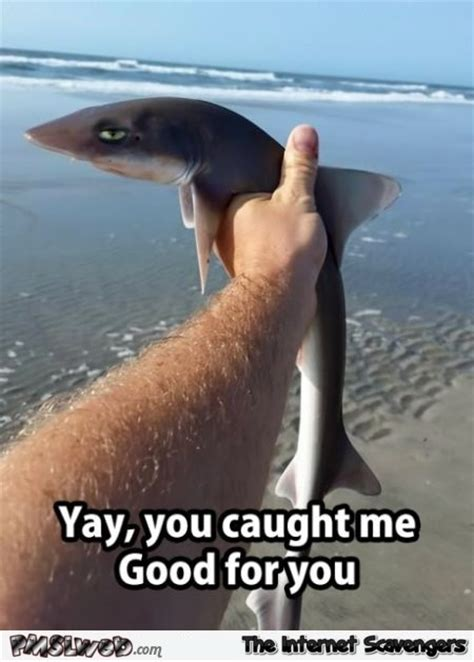 Shark Attack Meme - funny jaded shark meme pmslweb