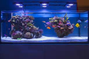 marine tank aquascaping aquascaping marin