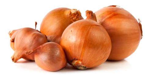 piantare cipolle in vaso cipolle 5 modi per piantarle e coltivarle greenme