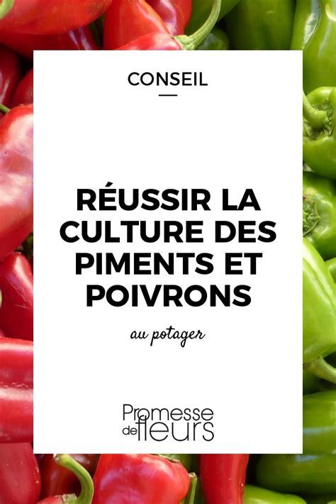 Plantation Aubergine Et Poivron by R 233 Ussir La Culture Des Piments Et Poivrons Jardin