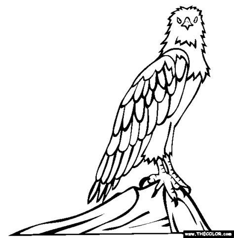 sea birds coloring pages sea eagle coloring download sea eagle coloring