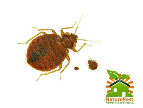 bed bug pest control service naturepest non toxic eco friendly complete bed bug control service