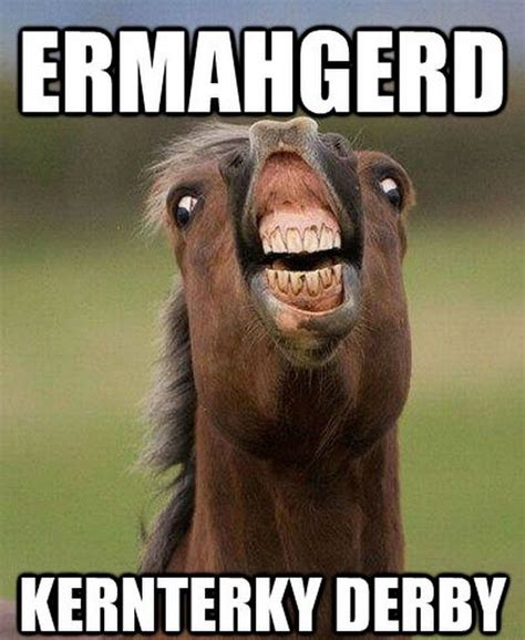 funny horse meme www elroseequine com funny horses