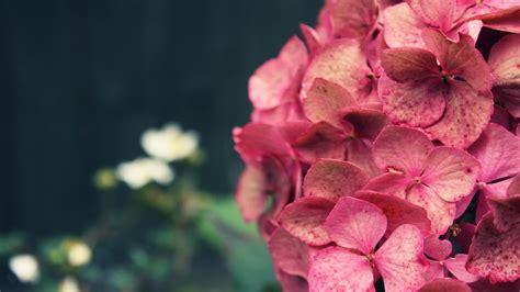 imagenes rosas en hd flores hd 1920x1080 fondos de pantalla y wallpapers