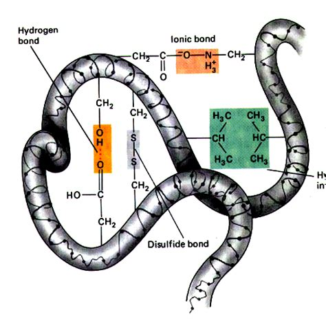 protein tertiary structure the forces that give rise to the tertiary structure ofa