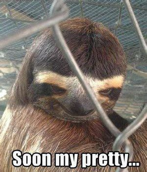 images  sloths  pinterest  internet
