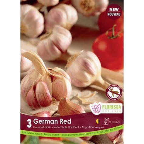 garlic spanish roja bulbs garlic bulbs arts nursery