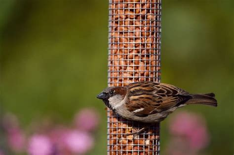go nuts for birds at kilbroney