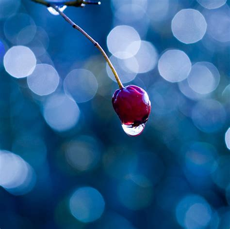 beautiful exles of bokeh photography