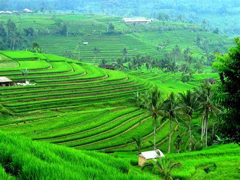 Nature Indonesia indonesia natures