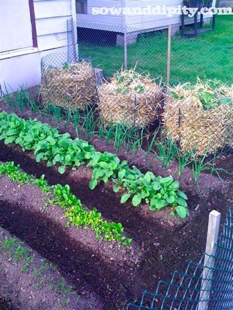 vertical potato garden diy vertical gardens are they all safe
