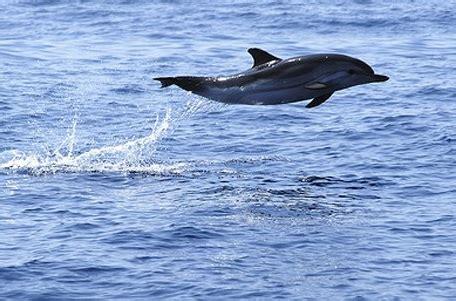 banco di sardegna tortoli avvistato un banco di delfini a porto frailis il