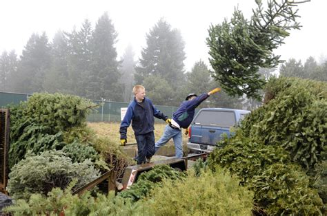 washougal christmas tree farm scouts tree recycling drive will be saturday the columbian