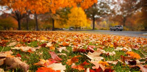 hire a troy landscaping company for a fall clean up or