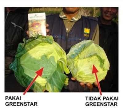 Serbuk Buah Zuriat 60 Gram pupuk serbuk green 60 gram bibitbunga