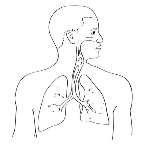 anatomy coloring book respiratory system respiratory system coloring pages coloring home