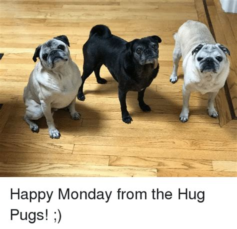 monday pug 25 best memes about happy monday happy monday memes