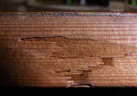 Termites In Furniture by The Signs Of Termites Termite Web