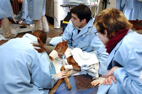 Lu Emergency Charge emergency vet veterinary service 24 hour animal autos post