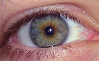 eye color hazel hazel isn t a real eye color it s actually an exle of