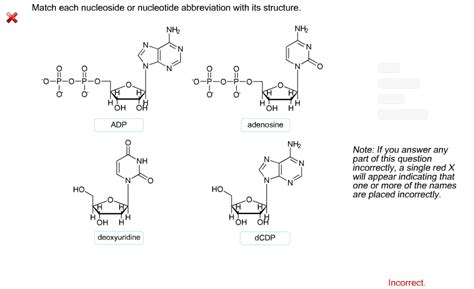 solved match each chemical reaction with the correct diag solved match each nucleoside or nucleotide abbreviation w
