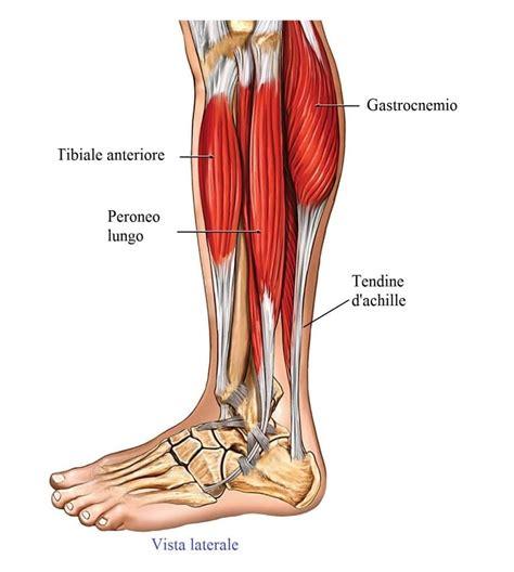 tendinite caviglia interna dolore nel tallone e nella parte posteriore della caviglia
