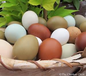 Backyard Eggs The Chicken 174 8 Tips For Clean Eggs From Backyard