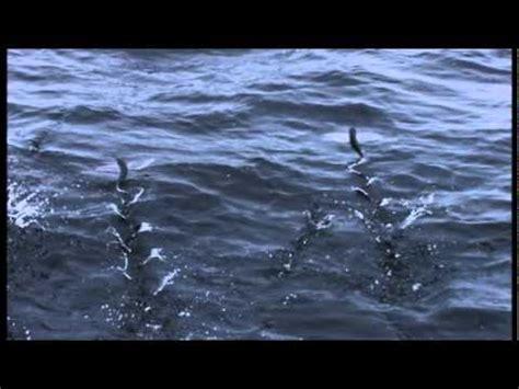 lucertole volanti pesci volanti e lucertole camminano sull acqua