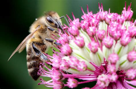 Keep Bees Away From House by Plants That Keep Bees Away Simplemost
