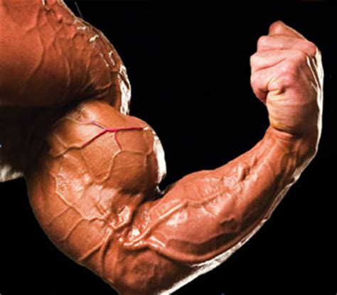 creatine vascularity build muscles faster how to increase vascularity