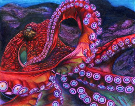 colorful octopus colorful octopus drawings