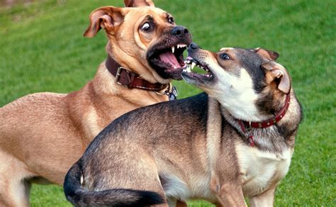 kinds  puppy aggression
