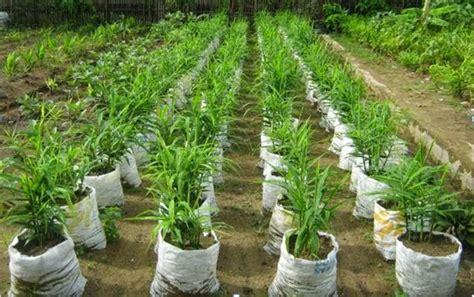 membuka usaha yang menjanjikan peluang usaha pertanian yang menjanjikan